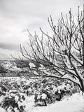 Sneeuw op Naakte Takken Royalty-vrije Stock Afbeeldingen