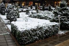 Sneeuw op struiken in het stadspark stock afbeelding