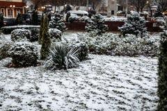 Sneeuw op struiken in het stadspark royalty-vrije stock afbeelding