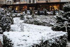 Sneeuw op struiken in het stadspark royalty-vrije stock afbeeldingen
