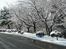 Sneeuw op takken royalty-vrije stock fotografie