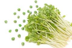 Sneeuw Pea Sprouts met groene erwt royalty-vrije stock afbeeldingen