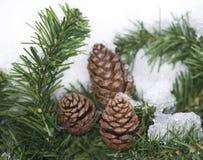 Sneeuw Pijnboom Stock Foto's