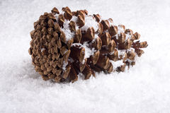 Sneeuw pinecone Royalty-vrije Stock Afbeelding