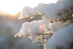 Sneeuw Prachtig Royalty-vrije Stock Afbeeldingen