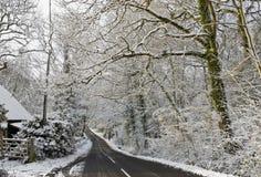 Sneeuw steeg Royalty-vrije Stock Foto