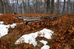 Sneeuw stormachtige bergen Stock Afbeelding