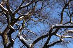 Sneeuw tak Stock Foto's