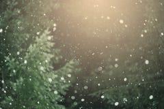 Sneeuw tegen de Achtergrond van het Bos Royalty-vrije Stock Foto's
