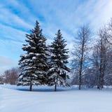 Sneeuw Twee Pijnboombomen Royalty-vrije Stock Foto's