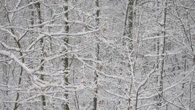 Sneeuw in vergankelijk bos met sneeuw behandelde bomen stock videobeelden