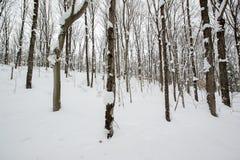 Sneeuw Vergankelijk Forest Landscape Stock Afbeelding