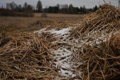 Sneeuw, vorst in de trog Royalty-vrije Stock Foto
