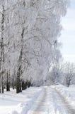 Sneeuw weg en berk Royalty-vrije Stock Foto's