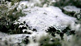 Sneeuw witte installaties bij Grond stock afbeelding