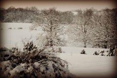 Sneeuw witte wereld Stock Afbeelding