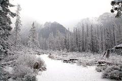 Sneeuwaard in Hoge Tatras, Slowakije royalty-vrije stock fotografie