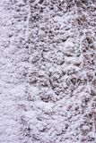 Sneeuwachtergrond op de boom royalty-vrije stock fotografie