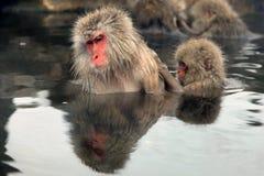 Sneeuwapen, macaque badend in de hete lente, de prefectuur van Nagano, Japan stock afbeeldingen