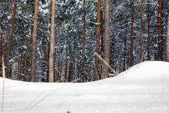 Sneeuwbank vóór sneeuwhout Royalty-vrije Stock Afbeelding