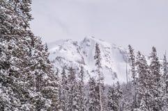 Sneeuwberg achter de Lodgepole-Pijnbomen Stock Foto