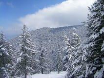 Sneeuwberg, bomen en blauwe hemel Stock Fotografie