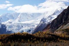 Sneeuwberg en bos royalty-vrije stock foto's