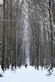 Sneeuwbergen in Isaba Royalty-vrije Stock Afbeelding
