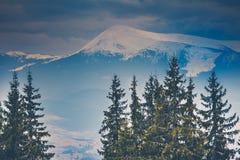Sneeuwbergpieken en pijnboombomen stock afbeeldingen