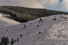 Sneeuwbergstekel Stock Afbeeldingen