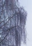 Sneeuwberktakken in de winter tegen de hemel royalty-vrije stock foto