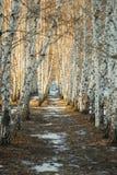 Sneeuwberkweg Stock Afbeeldingen