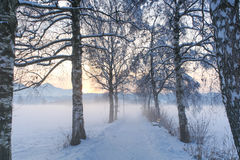 Sneeuwberkweg IV Royalty-vrije Stock Foto's