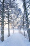 Sneeuwberkweg V Royalty-vrije Stock Foto's