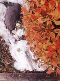 Sneeuwbladeren en boom royalty-vrije stock afbeelding