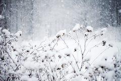 Sneeuwblizzard Royalty-vrije Stock Afbeeldingen