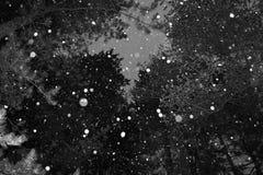 Sneeuwbomen stock afbeeldingen