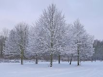 Sneeuwbomen Stock Foto
