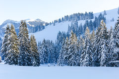 Sneeuwbomen V Royalty-vrije Stock Foto