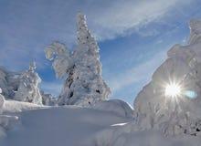 Sneeuwbomen van een de winterberg stock afbeeldingen