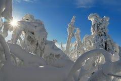 Sneeuwbomen van een de winterberg royalty-vrije stock foto