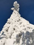 Sneeuwbomen van een de winterberg stock afbeelding