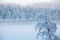 Sneeuwboom met mist op een de bomenlandschap van de de winterpijnboom royalty-vrije stock fotografie