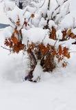 Sneeuwboom met roestige hieronder verlaten de herfstbladeren stock afbeelding