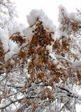 Sneeuwboom met roestige hieronder verlaten de herfstbladeren stock foto