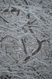 Sneeuwboomtakken stock fotografie