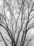 Sneeuwboomtakken in de winter stock foto