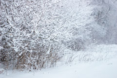 Sneeuwbos royalty-vrije stock afbeeldingen
