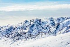 Sneeuwbos in de winter Het snow-covered Gongnaisi-bos in de winter stock foto's