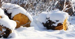 Sneeuwbos in de zonneschijn en het brandhout Stock Afbeelding